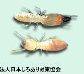 シロアリの種類を簡単に判別する方法を教えてください